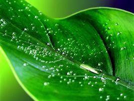 Бесплатные фото лист,зеленый,прожилки,капли,вода,роса,макро