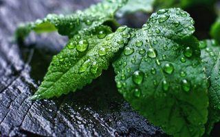 Заставки листья,растение,зеленое,капли,вода,роса,кора