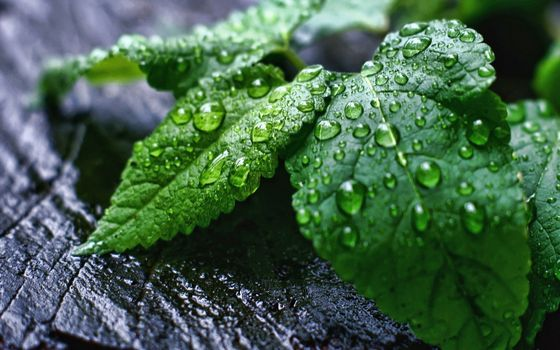 Фото бесплатно листья, растение, зеленое