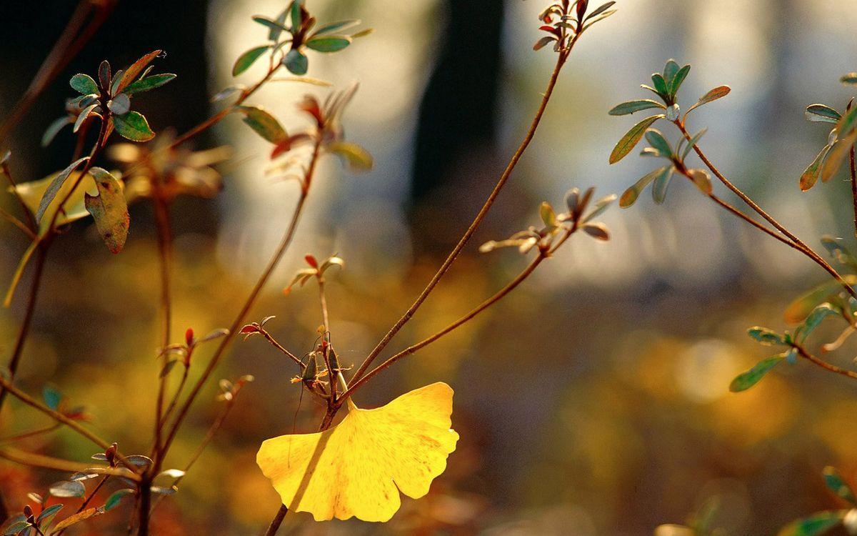 Фото бесплатно литься, кусты, свет, деревья, листочки, небольшие, природа, природа - скачать на рабочий стол