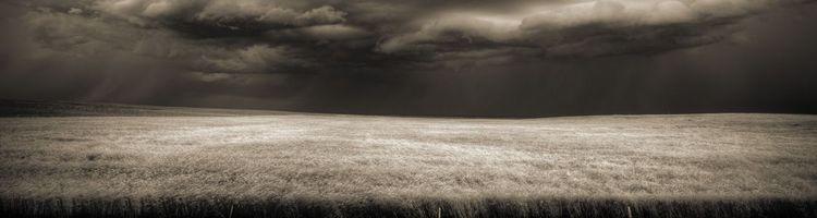 Обои пшеничное поле, грозовые, тучи, ветер, простор, природа, пейзажи