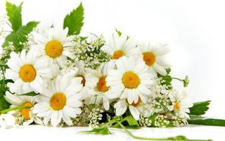 Photo free chamomile, bouquet, armful