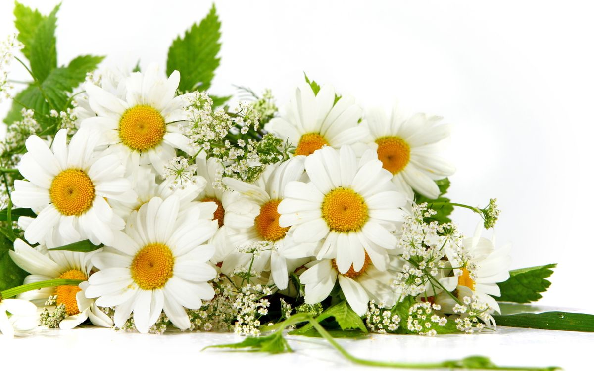 Free photo chamomile, bouquet, armful - to desktop