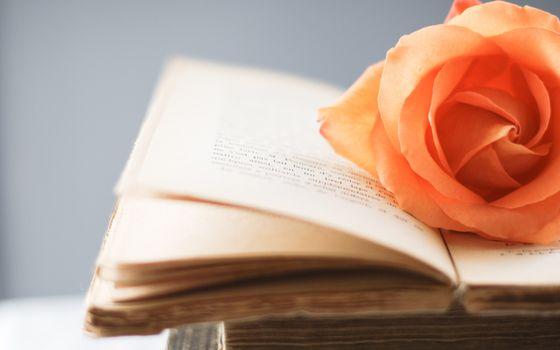 Photo free flower, literature, leaflets