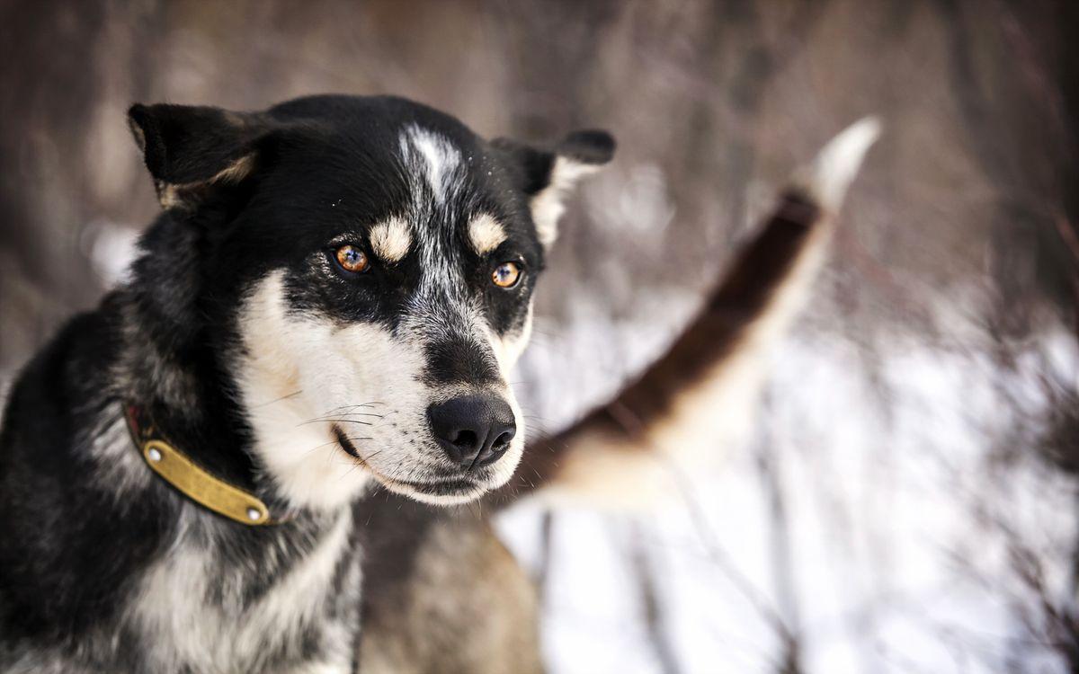 Фото бесплатно собака, глаза, морда, ошейник, снег, ветки, животные, животные