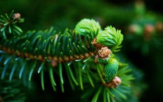 Бесплатные фото ветка,еловая,иголки,растение,зеленое,лес,хвойное