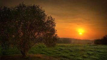 Бесплатные фото закат, солнце, поле, трава, дерево, природа, пейзажи