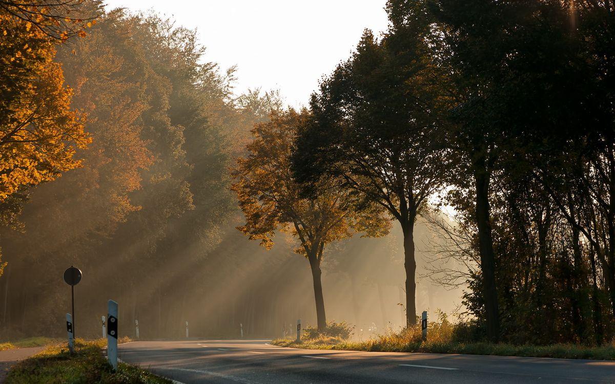 Фото бесплатно дорога, осень, деревья, асфальт, перекресток, лучи солнца, природа, природа - скачать на рабочий стол