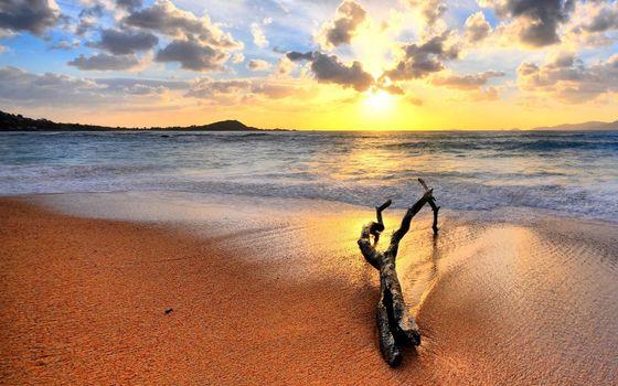 Бесплатные фото берег,пляж,песок,океан,волны,коряга,ветка,небо,закат,солнце,пейзажи,природа