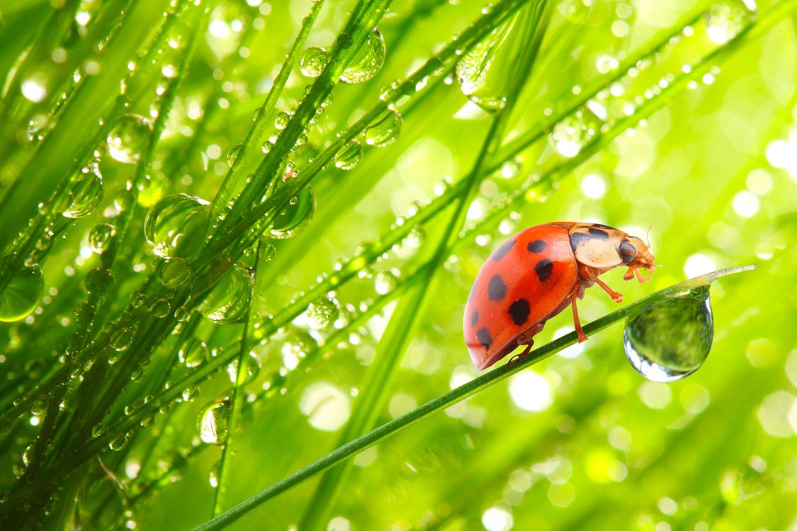 Photos for free drops, beetles, ladybugs - to the desktop