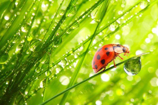 Фото бесплатно капли, жуки, божьи коровки