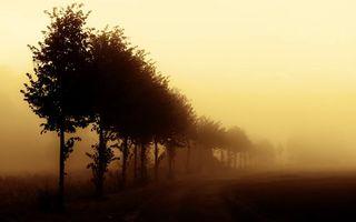 Бесплатные фото деревья,кроны,листва,трава,туман,густой,природа
