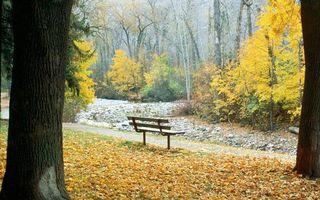 Бесплатные фото деревья,листья,скамейка,дорожка,осень,лес,природа