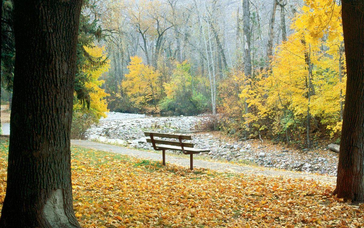 Фото бесплатно деревья, листья, скамейка, дорожка, осень, лес, природа, природа