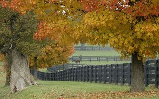 Фото бесплатно лошади, деревья, загон