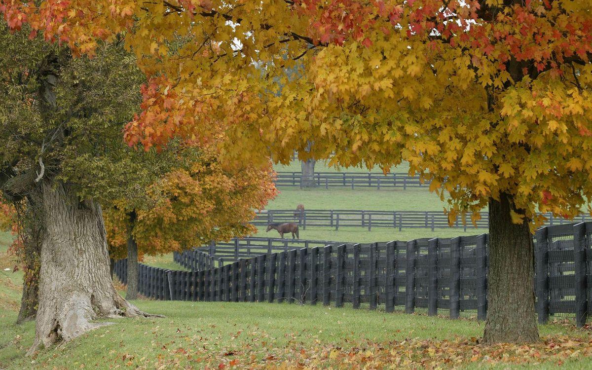Фото бесплатно лошади, деревья, загон - на рабочий стол