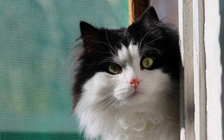 Бесплатные фото кот,пушистый,морда,глаза зеленые,шерсть