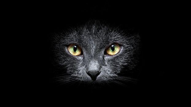 Заставки кот, черный, глаза