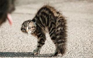 Фото бесплатно кот, испуг, бешеный