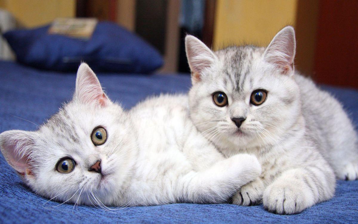 Фото бесплатно котята, коты, пушистые - на рабочий стол