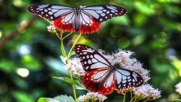 Заставки красивые,бабочки,крылья,усики,трава,листья,насекомые