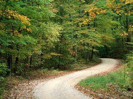 Бесплатные фото лес,деревья,зелень,дорога,песок,осень,природа