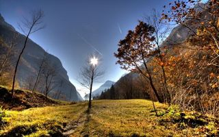 Заставки осень, деревья, голые