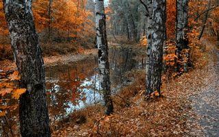 Фото бесплатно листва, река, Береза