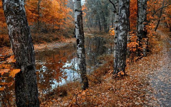 Заставки листва, река, Береза