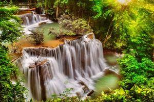 Фото бесплатно кустарник, природа, деревья