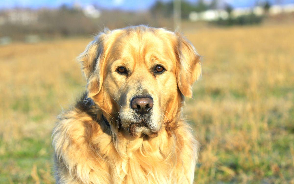 Фото бесплатно щенок, кобель, сучка, трава, нос, глаза, шерсть, мех, усы, животные, собаки, собаки