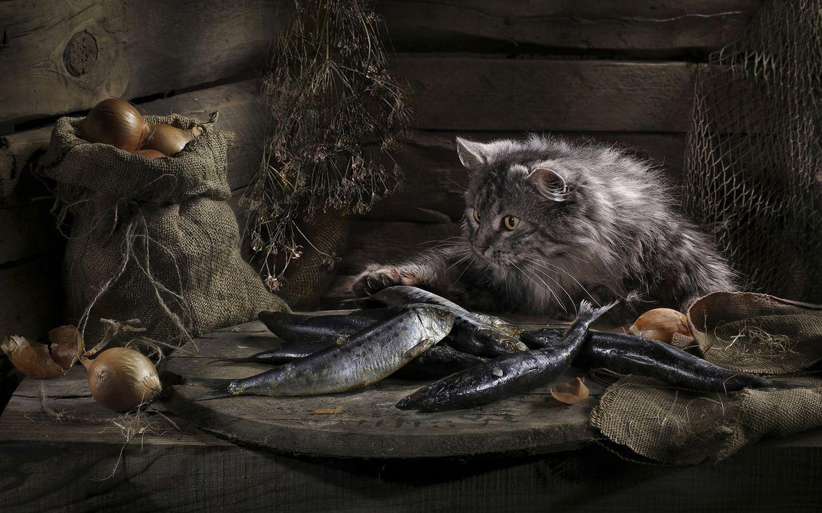 Фото бесплатно шерсть, лапы, глаза, рыба, лук, мешок, кошки, кошки