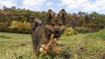 Бесплатные фото собака,щенок,глаза,пасть,трава,деревья,лес