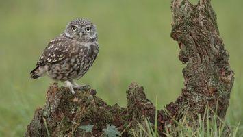 Заставки сова,дерево,трава,зеленая,глаза,клюв,птицы
