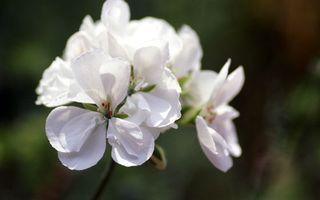 Фото бесплатно тычинки, белые, стебель