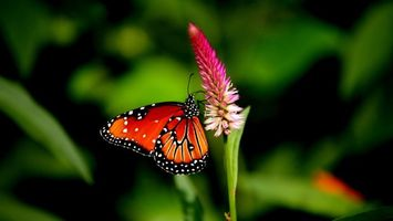 Photo free flower, butterfly, wings