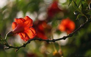 Бесплатные фото цветок,ветка,листья,лепесток,тычинка,почки,лето