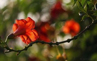 Заставки цветок, ветка, листья