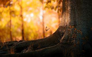 Фото бесплатно бабочка, крылья, рисунок, узор, лапки, усики, дерево, кора, корни, трава, земля. листья, лес, парк, насекомые, природа, пейзажи