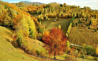 Фото бесплатно деревья, лес, дома, поля, осень, листопад, листья, трава, зелень, забор, горы, холмы, пейзажи