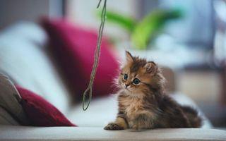Бесплатные фото котенок, лапа, нитка, играет, кошки