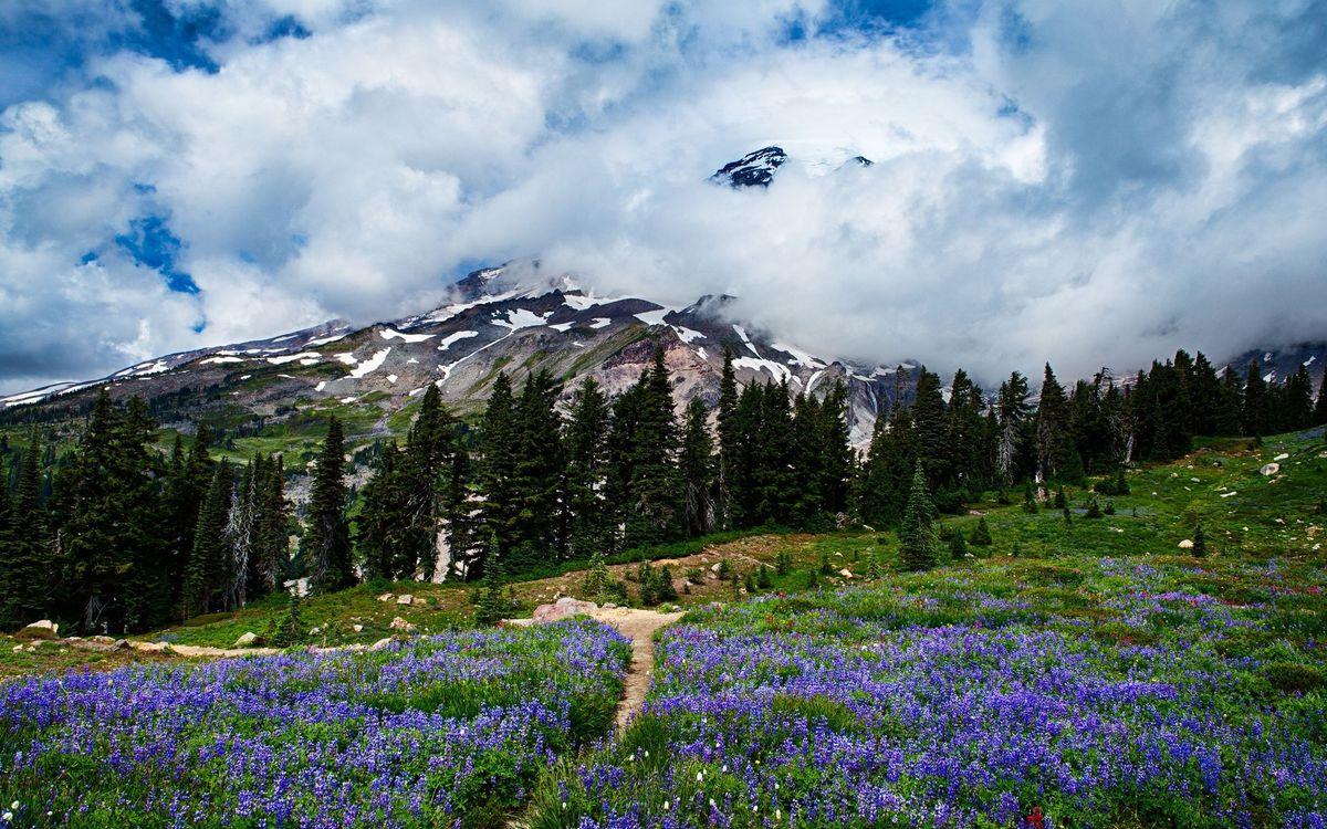 Фото бесплатно горы, снег, деревья, поляна, цветы, трава, природа, природа
