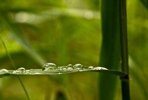 Фото бесплатно капли, макро, трава