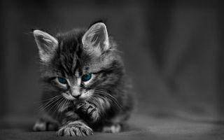 Бесплатные фото котенок,серый,лапки,голубые,глаза,серое,фото