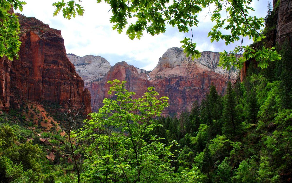 Фото бесплатно красные, скалы, деревья - на рабочий стол