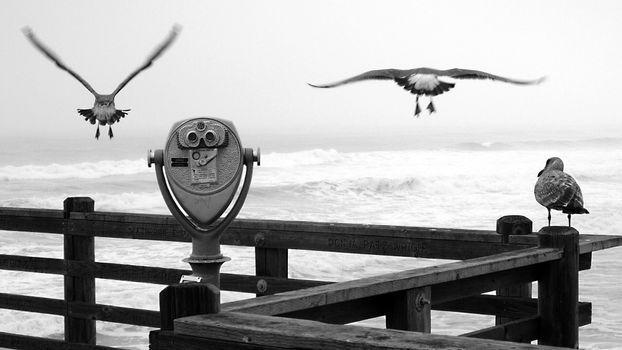 Бесплатные фото ласточки,несколько,море,волны,небо,черно-белый,птицы