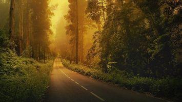 Бесплатные фото лес, деревья, трава, туман, дорога, разметка, природа