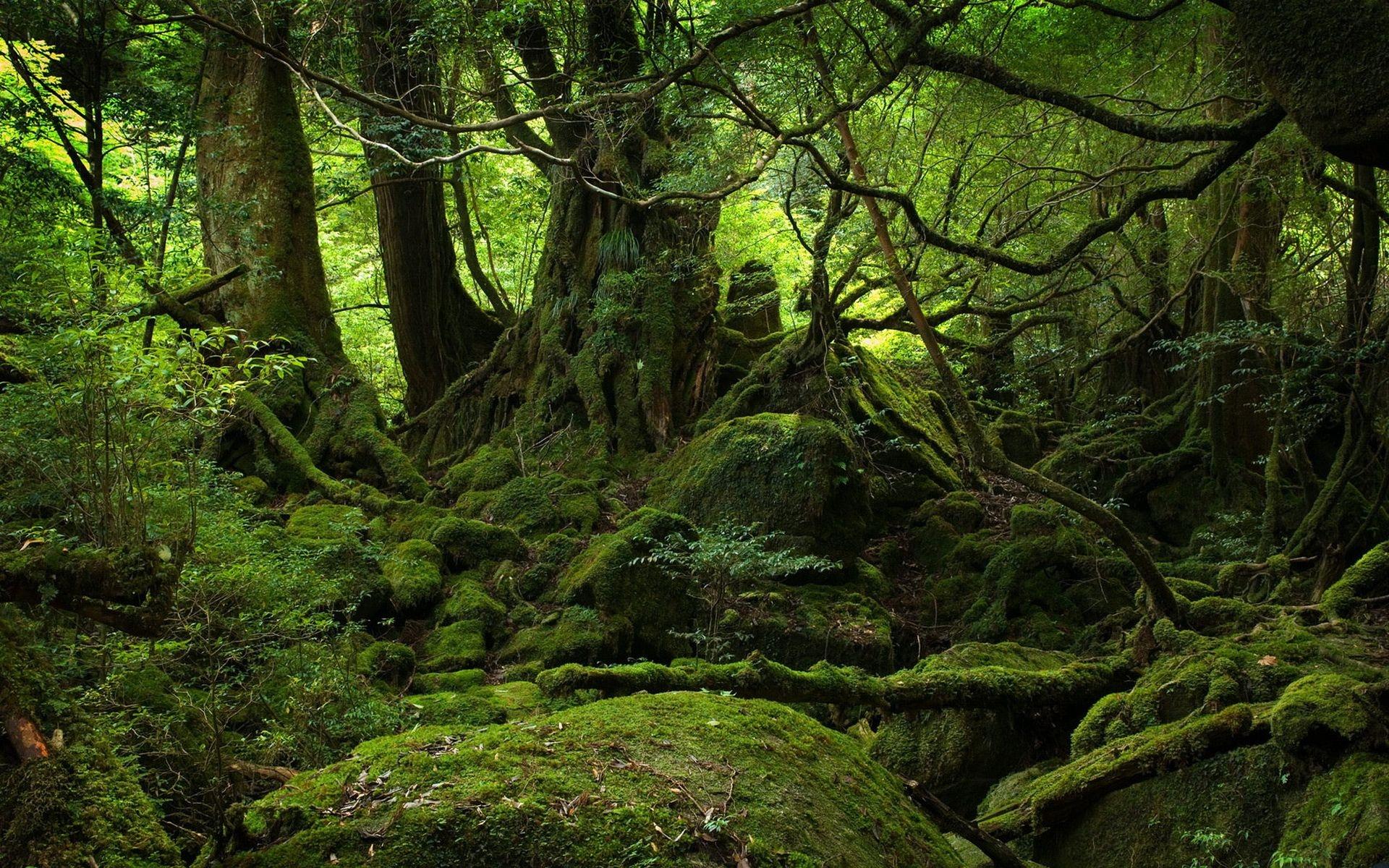 лес, деревья, ветки