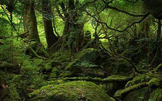 Бесплатные фото лес,деревья,ветки,корни,камни,мох,природа