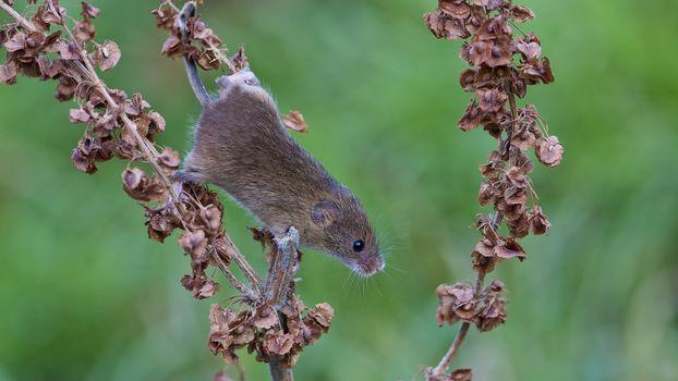 Photo free mouse, gray, tree